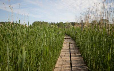 2. Parainen – luontoa ja polkuja